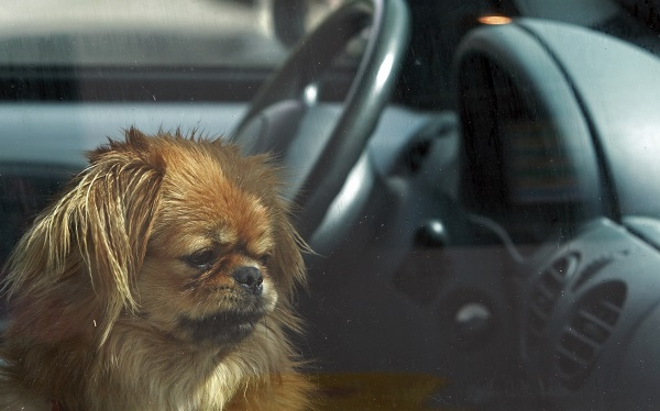 Hot Dogs Locked In The Car Is Not Cool!